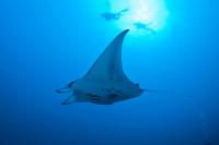 Palau Siren Liveaboard Details 10