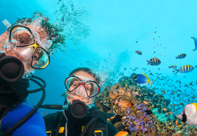 Divers diving in the Red Sea by Liveaboard