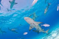 Bahamas Aggressor Liveaboard Details 16