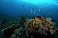 Philippine Siren Liveaboard Details 12