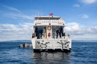 Atlantis Azores Liveaboard Details 11