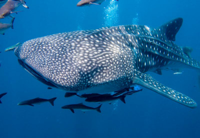 Diving by Liveaboard in the Philippines