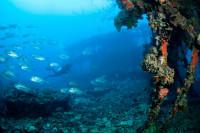 Palau Siren Liveaboard Details 17
