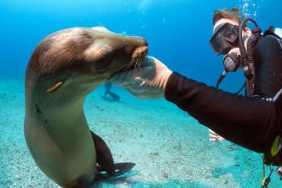 Galapagos Master - Offer - Sealion