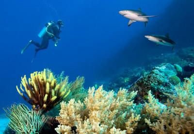 Australia Liveaboard Diving