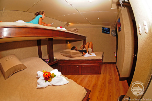 Okeanos Aggressor I Quad Stateroom Cabin