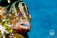 Bahamas Aggressor Liveaboard Details 15