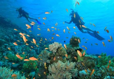 Scuba diving the Bahamas