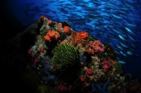 Philippine Siren Liveaboard Details 10