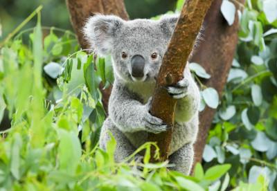 Australia - Diving by Liveaboard