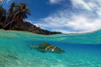 French Polynesia Master Liveaboard Details 2