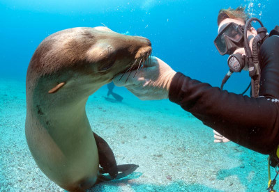 Liveaboard diving the Galapagos Islands