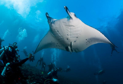 Papua New Guinea - Diving with Mantas