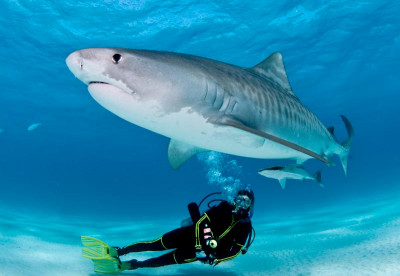 Diving the Bahamas by Liveaboard
