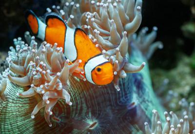 Red Sea Diver - Liveaboard Divinf in Egypt