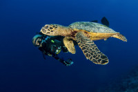French Polynesia Master Liveaboard Details 7