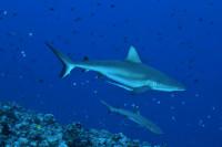 Palau Siren Liveaboard Details 13